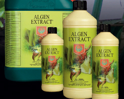 House&Garden Algen Extract