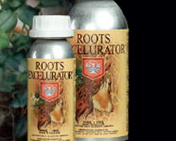 House&Garden Roots Excelurator